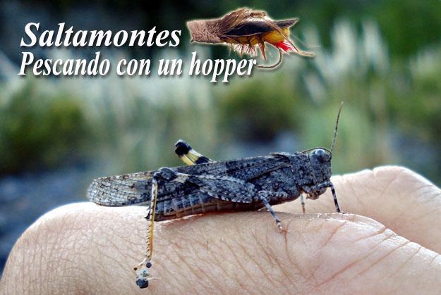 Saltamontes - Pescando con Hopper 01